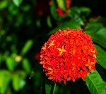 Atui-red-flower