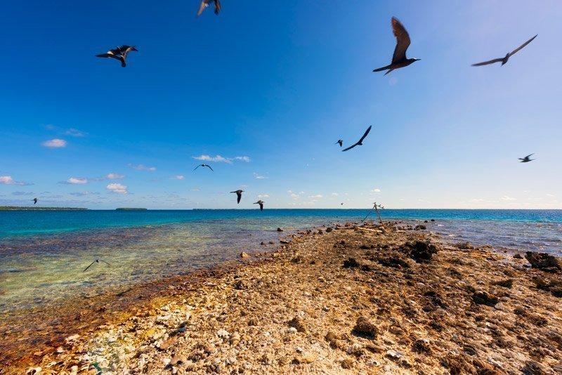 Manihiki birds