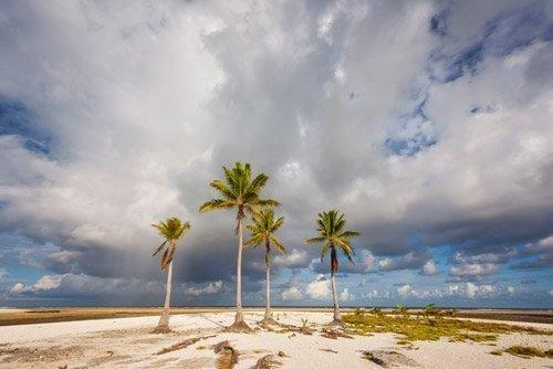 PukaPuka palm island