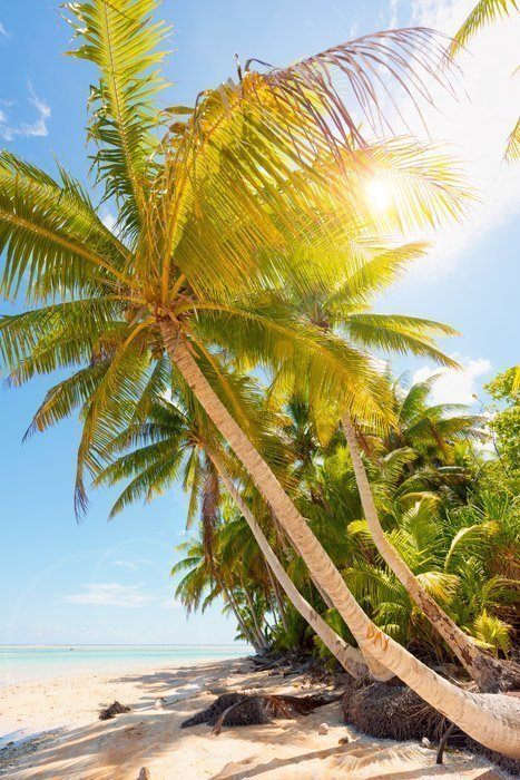 PukaPuka palm