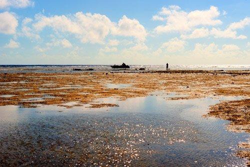 PukaPuka reef