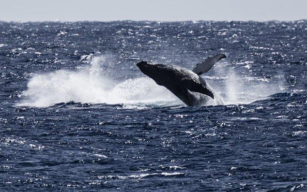 IslandAwe - Vibrant Marine Life in the Cook Islands