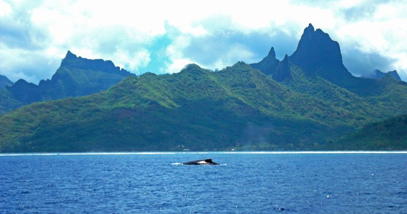 IslandAwe Moorea Coastline with Whale