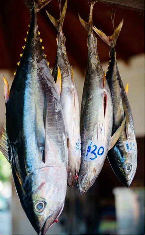 IslandAwe Punanga Nui Fresh Fish