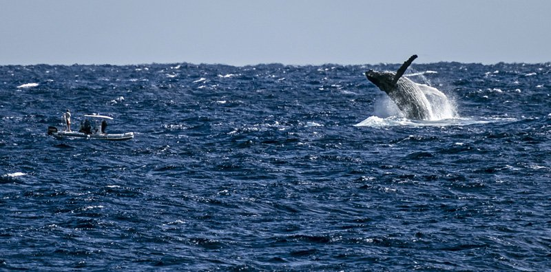 IslandAwe - Best whale-watching spots in the Pacific